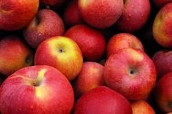 вечные яблоки