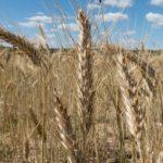 Откровенно – о проблемах в сельском хозяйстве
