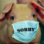 Как защититься от «свиного» гриппа?