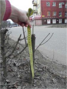 обрезка кустарников 34 см